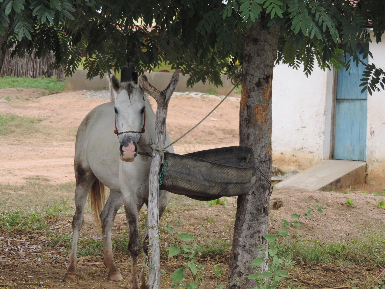 Club-equestre-saidia-berkane